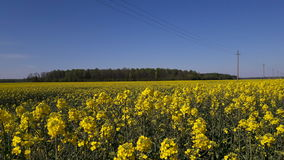 Fields. Started to blossom. Kėdainiai district, Lithuania stock images