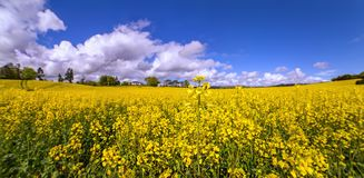 Fields on sunny day in a county Cork. Panoramic view stock photos