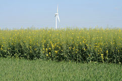 Rape fields and wind Stock Photos