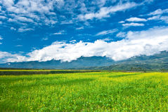 rape flower field with beautiful cloudscape Stock Photo