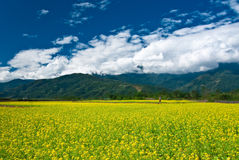 Rape flower field with beautiful cloudscape Royalty Free Stock Images