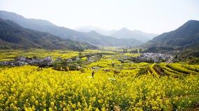 Rape flower field. A rape flower field in China. Photo was taken on Feb 2012 Stock Images