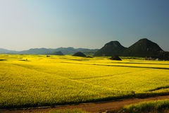 Rape flower field of Luoping. Luoping is a county in YunNan province of China. It is dominated by karst features with small basins among independent green hills Stock Images