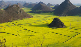 Rape flower field of Luoping. Luoping is a county in YunNan province of China. It is dominated by karst features with small basins among independent green hills Stock Image