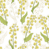Rape flower graphic color seamless pattern sketch illustration. Vector Stock Photography