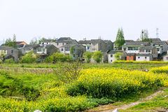 rape flower and house Stock Image