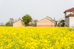 flower and house Stock Image