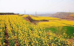 flower in Luoyang Li Lou royalty free stock photo
