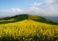 Rape flower mountain Stock Photo