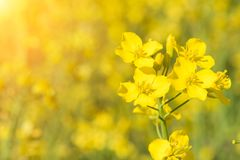 Flower in the sun. Close-up, bokeh, outdoors stock image