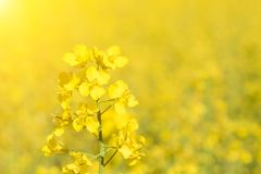 Flower in the sun. Close-up, bokeh, outdoors stock photo