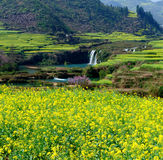 Rape flower & waterfall of Luoping Royalty Free Stock Images