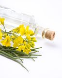 Rape flower on white table Stock Photos