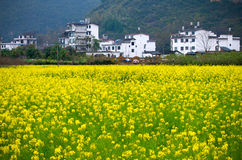 Rape flower in Yangshuo, Guilin, China Royalty Free Stock Photos