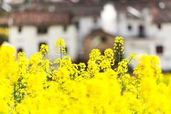 Rape flowers and Chinese ancient buildings in China Stock Photo