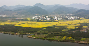 Rape flowers farm surrounded by mountain and water. The Wide-angle lens captures the whole view that the large amount of rape flowers were yellowing the fields Royalty Free Stock Photos