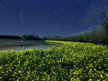 Flowers field. Field in the night, bright stars stock photo