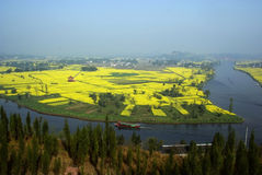 Rape flowers field with river Royalty Free Stock Image