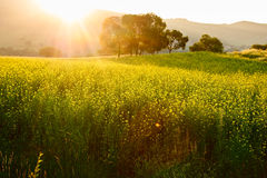 The flowers field sunset stock photography