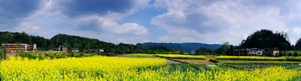 Pastoral scenery in spring. Rape flowers, green mountains, spring has come Stock Photo