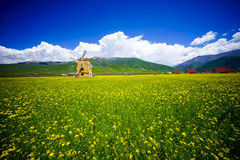 Rape flowers - million hectares of rape flowers beauty Stock Images