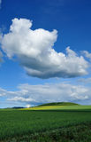 Rape flowers under blue sky and white clouds Stock Photo