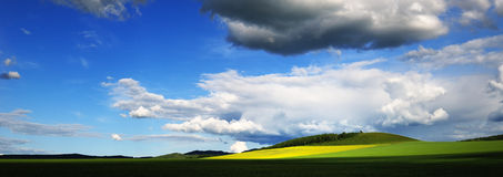 Rape flowers under blue sky and white clouds Royalty Free Stock Image