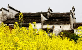 Flowers. Wuyuan, which is in Jiangxi province China, is quite famous for its flowers in spring. Photo taken on: Apr 2nd, 2012 stock images