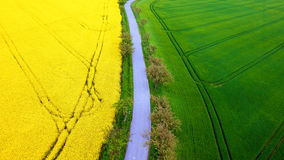 and grain field from aerial view Stock Photo