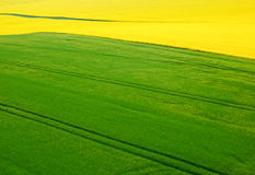 and grain field from aerial view Royalty Free Stock Photo