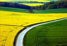 Rape and grain fields and road Royalty Free Stock Images