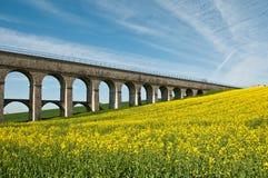 Rape landscape with bridge Royalty Free Stock Photos
