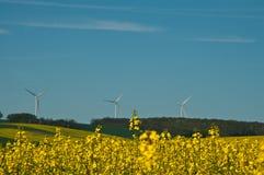 Rape Landscape. And wind turbine - summer nature background Royalty Free Stock Photo