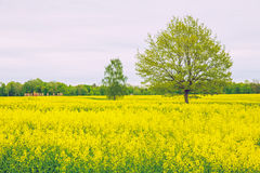 meadow at Latvia. stock photography