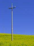 Rape and pylons Stock Photo