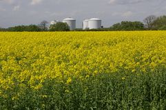Rape and Refinery 01. A juxtaposition of a field of flowering Oil Seed Rape and the oil storage vats of an industrial unit behind the field Royalty Free Stock Image
