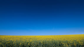 Rape Seed in British Countryside Stock Photos