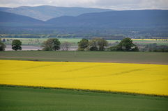 Rape seed farm Stock Photos