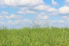 Field and cloud panorama Stock Photos