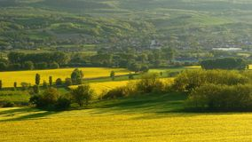 Rapeseed field in Hungary. Hungarian rapeseed field in spring royalty free stock image