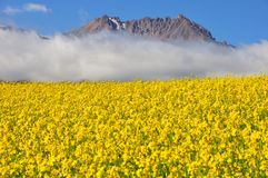 Rape seed field with mountains Stock Image