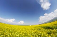 seed field under blue sky Stock Photos