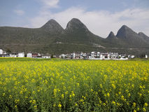 Rape seed field with village Stock Images