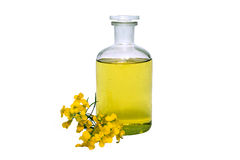 Rape seed oil. Glass bottle of rape seed oil with rape flowers and ribbon Royalty Free Stock Photos