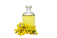 Rape seed oil. Glass bottle of rape seed oil with rape flowers and ribbon Royalty Free Stock Images
