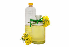 Rape seed oil. Glass and plastic bottle of rape seed oil with rape flowers Stock Images