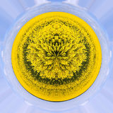 Rape seed planet Royalty Free Stock Images