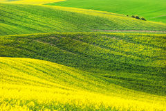 Rape waves fields Royalty Free Stock Images