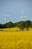 Rape and wind power Royalty Free Stock Photos