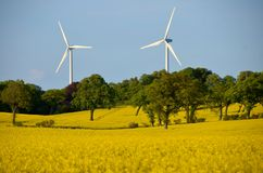 Rape and wind power Royalty Free Stock Images